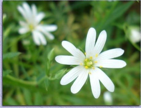 Les Fleurs A Loucrup Et Dans Les Environs